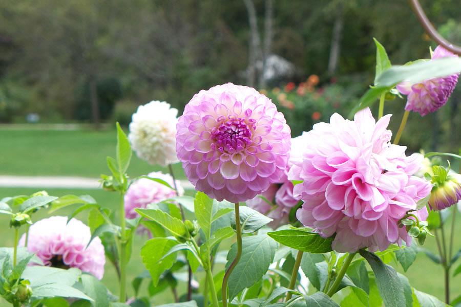 english_garden-09.jpg